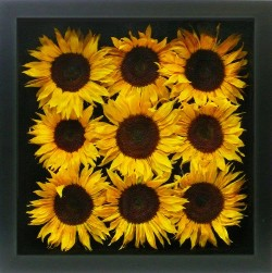 Sunflower Shadowbox